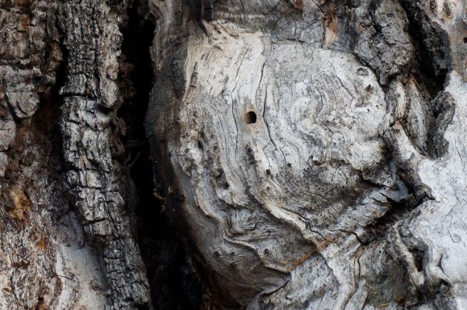 Dans l'arbre mort sur le chemin un cœur battait… Je vous souhaite une année 2014 pleine de surprises.