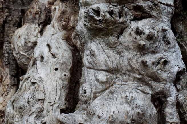 Une famille de lémuriens surgit alors de l'écorce…