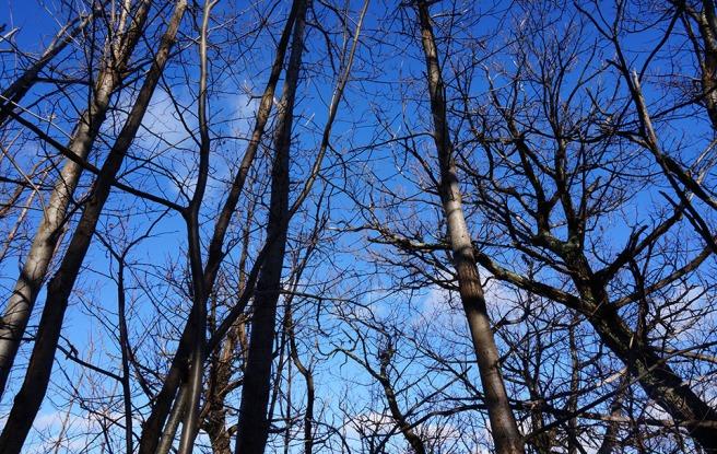 Le ciel de février foisonne de branches décharnées