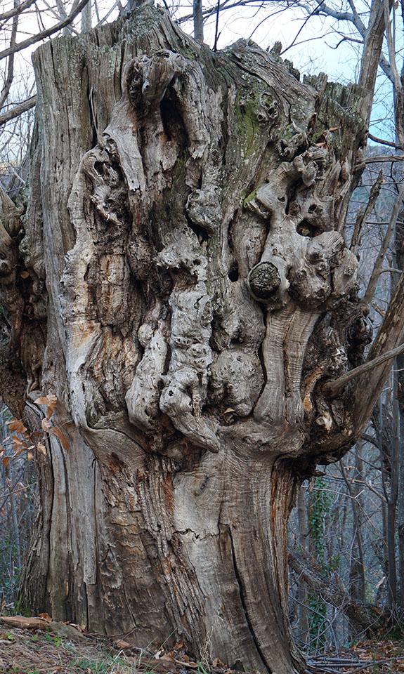 """""""Il était un arbre au bout de la branche – Un arbre digne de vie / Digne de chance / Digne de cœur"""" Robert Desnos"""