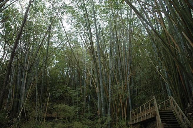 ateliers-du-deluge-bambou
