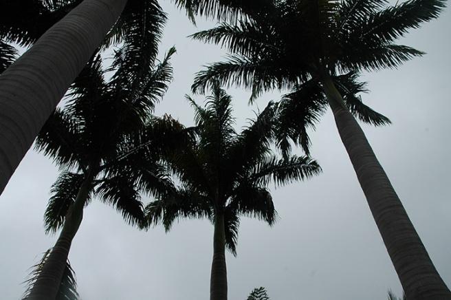 ateliers-du-deluge-palm