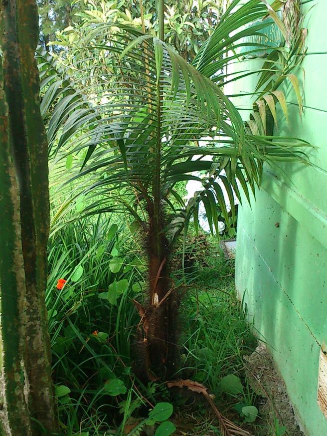 les-ateliers-du-deluge-Palmist1