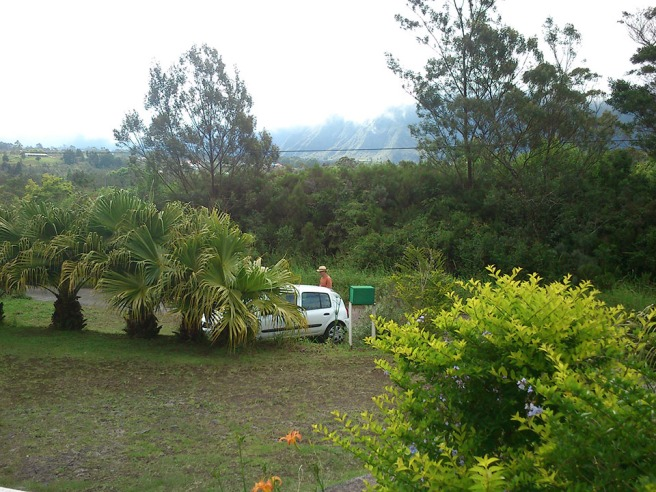 les-ateliers-du-deluge-Palmiste
