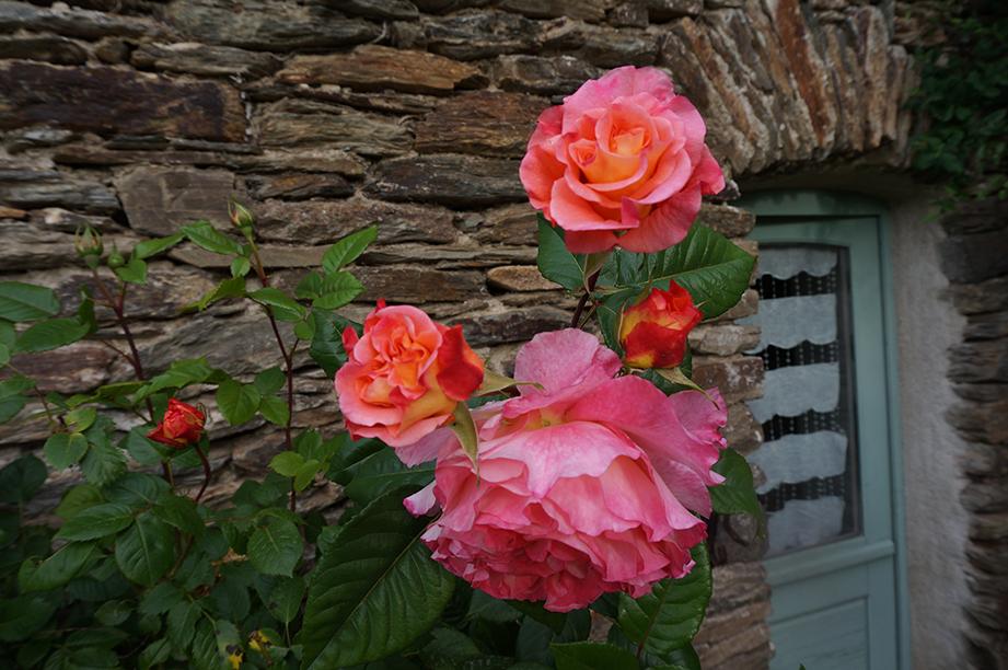 ateliers-du-deluge-rose