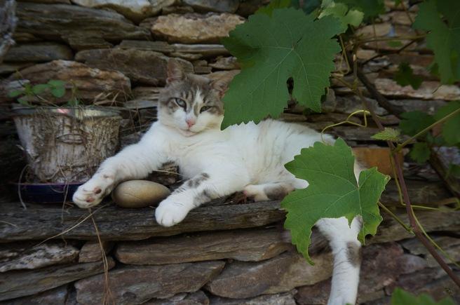ateliers-du-deluge-chat