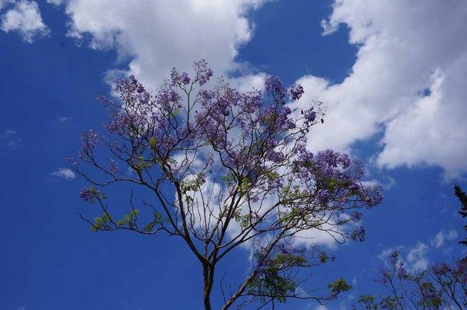 marlen-sauvage-arbreTunis