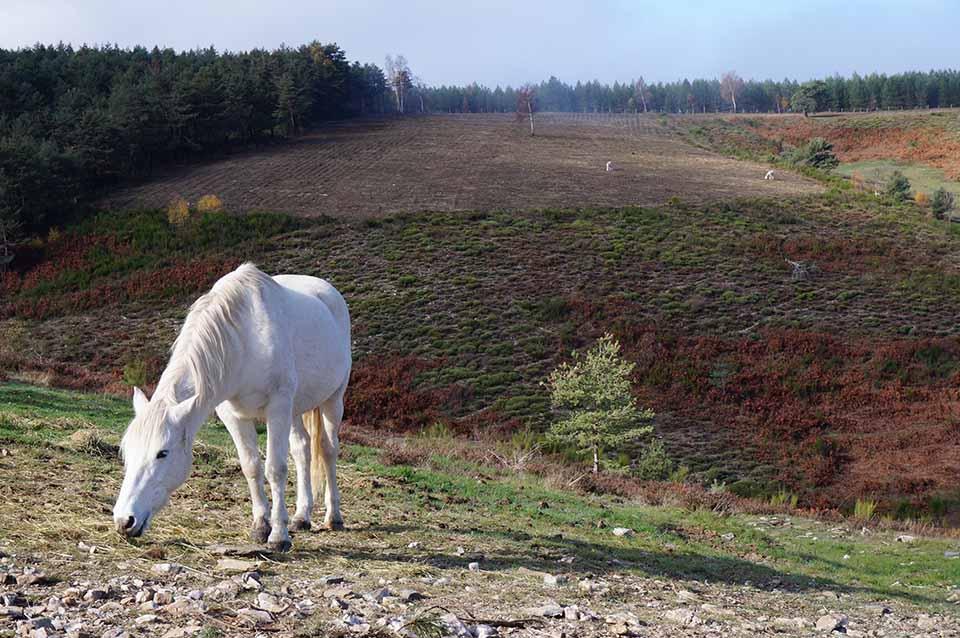 marlen-sauvage-cheval