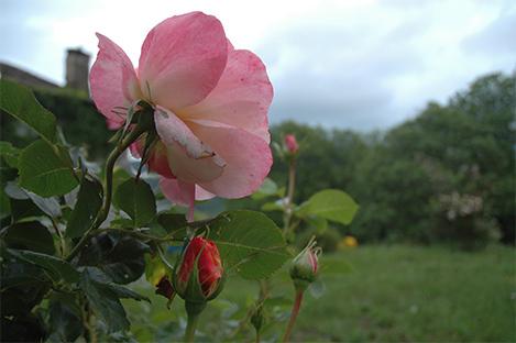 marlen-sauvage-roseciel