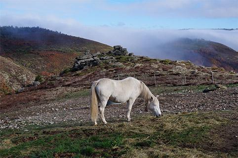 marlen-sauvage-paysage1