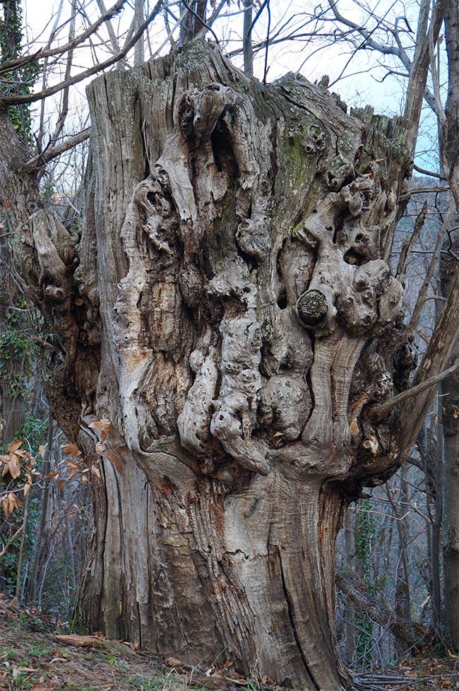 marlen-sauvage-arbremort