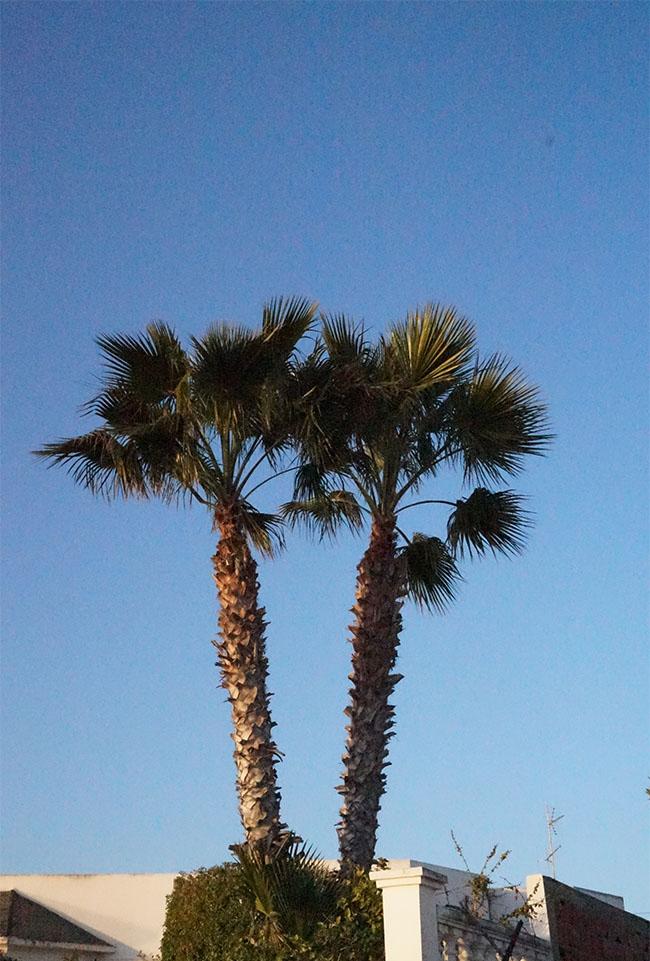 marlen-sauvage-palmier
