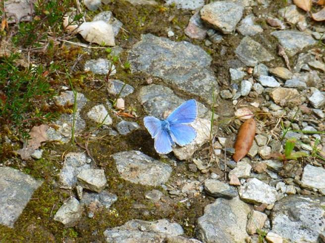 marlen-sauvage-papillon