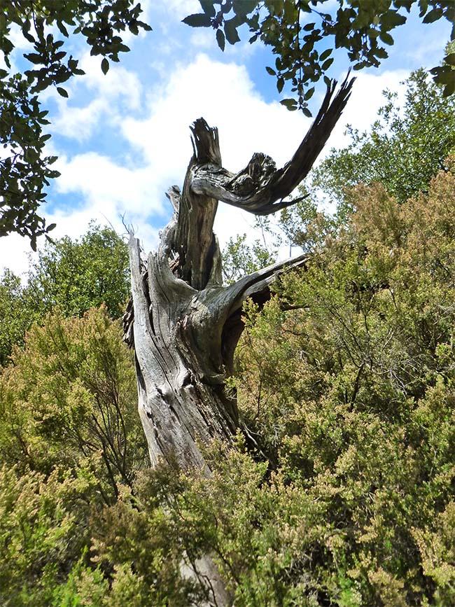 marlen-sauvag-arbremort2
