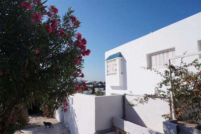 marlen-sauvage-Sidi