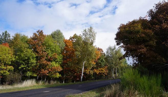 marlen-sauvage-automne
