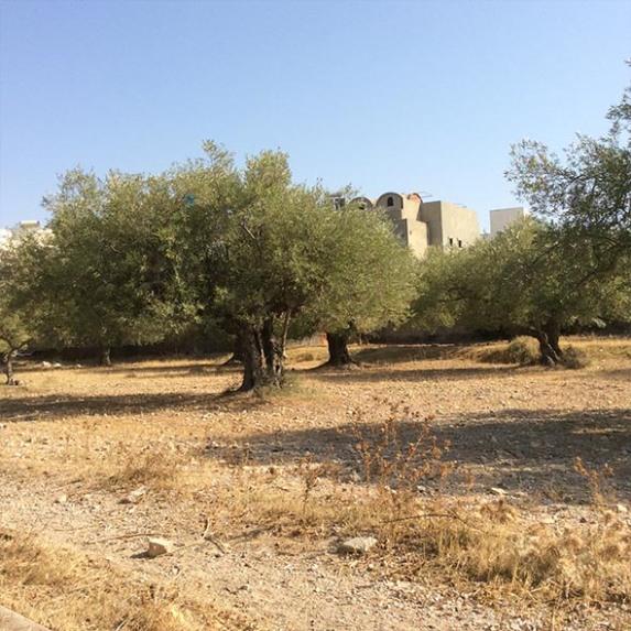 marlen-sauvage-olivier