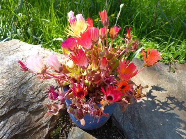marlen-sauvage-bouquet