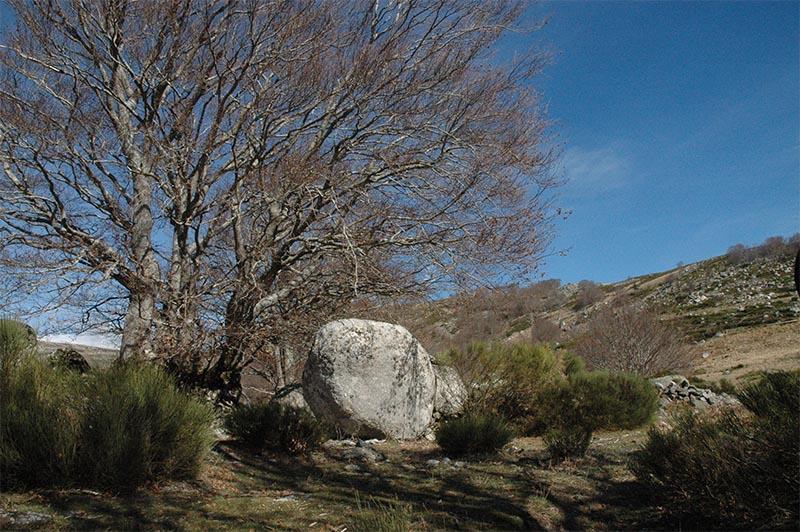 marlen-sauvage-pierres