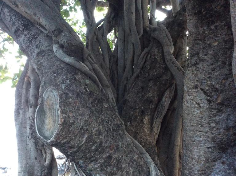 marlen-sauvage-arbre