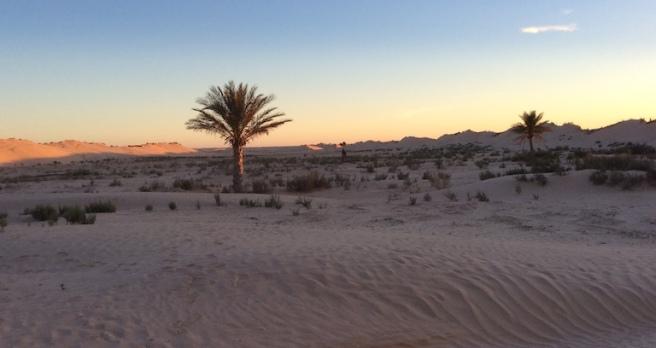 marlen-sauvage-desertFB