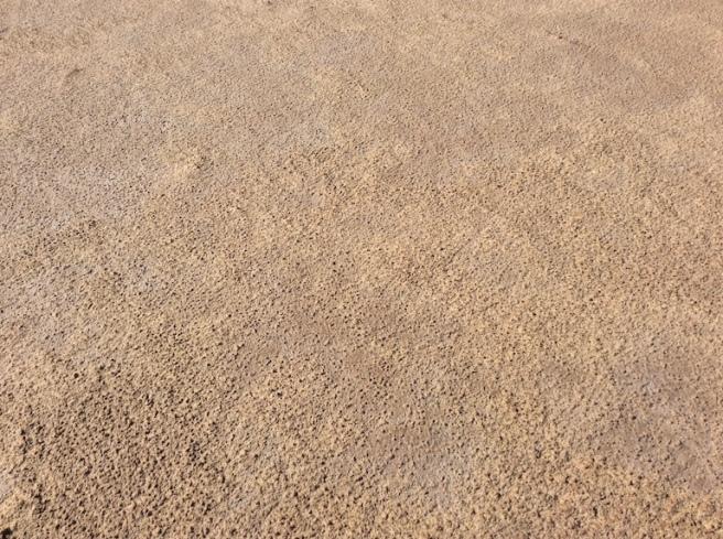 marlen-sauvage-grain