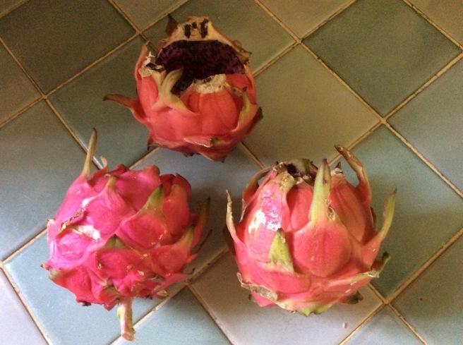 marlen-sauvage-pitaya