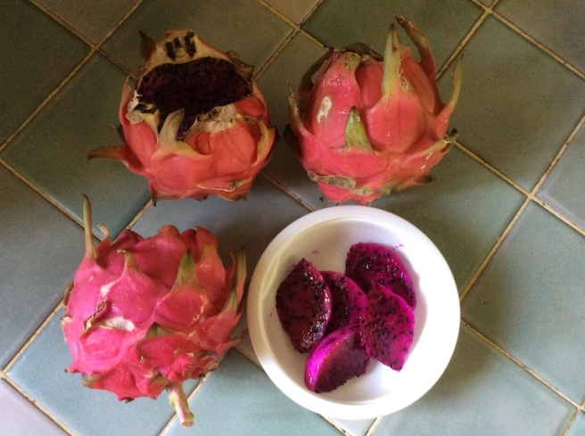 marlen-sauvage-pitaya1