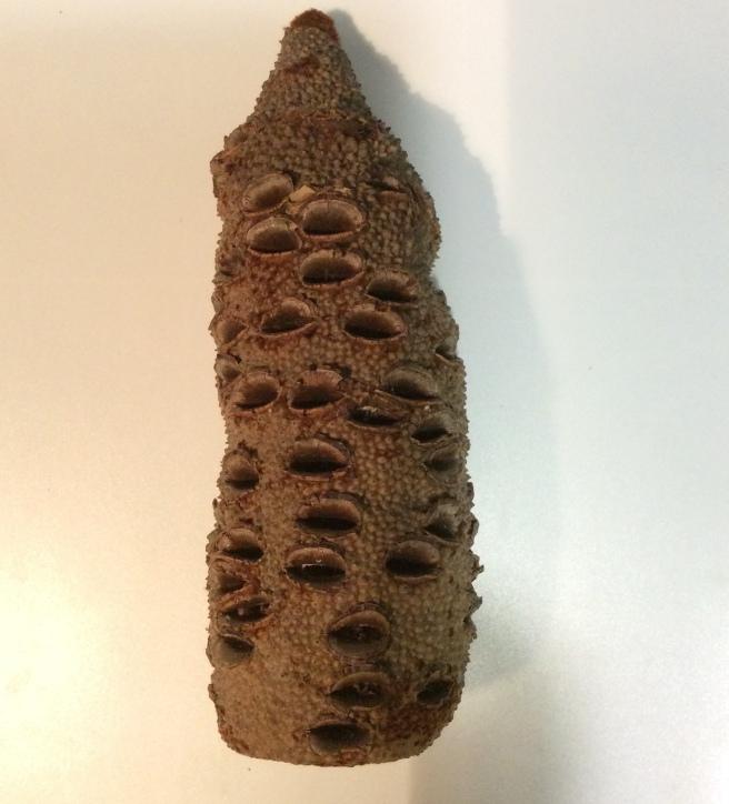 marlen-sauvage-pattern