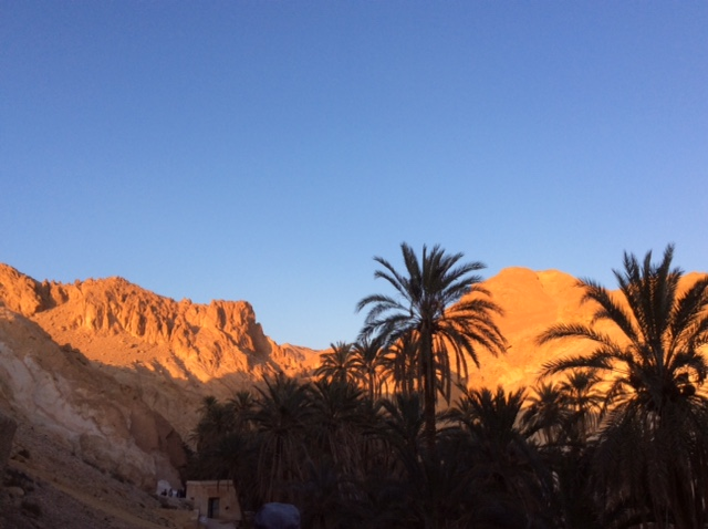 marle-sauvage-sud-tunisien