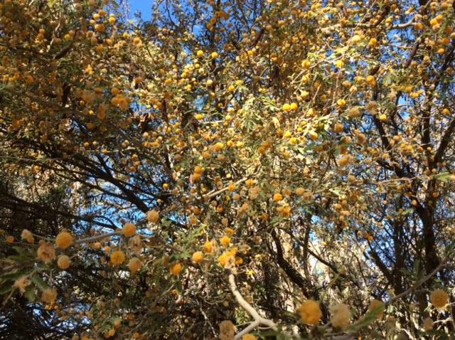 marlen-sauvage-arbre-fleurs