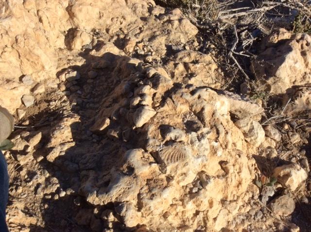 marlen-sauvage-fossiles