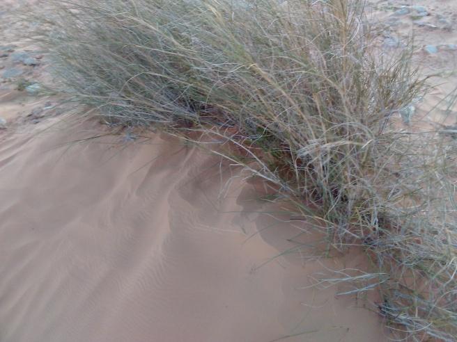 marlen-sauvage-desert