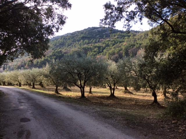 marlen-sauvage-oliviers